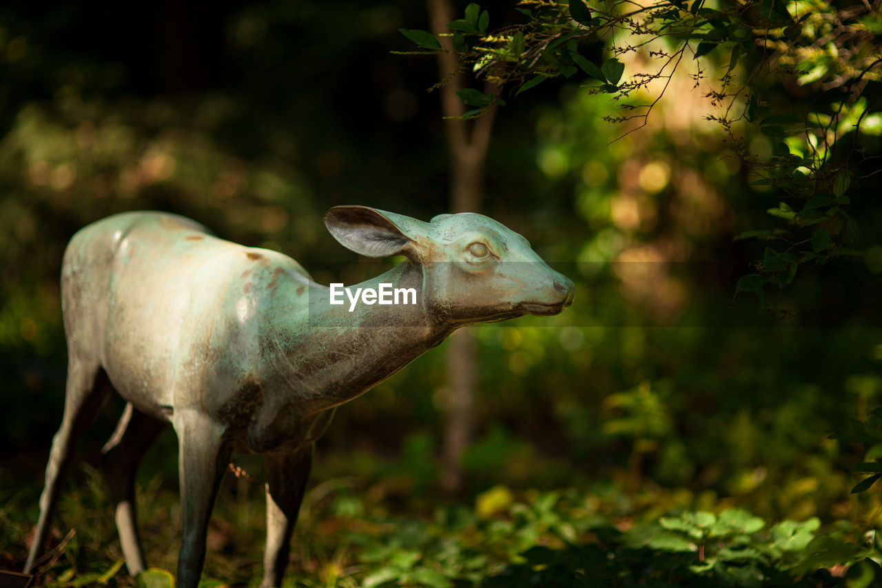 animal themes, animal, plant, animal wildlife, nature, no people, one animal, land, mammal, day, tree, animals in the wild, field, side view, focus on foreground, vertebrate, forest, outdoors, green color, domestic animals, herbivorous