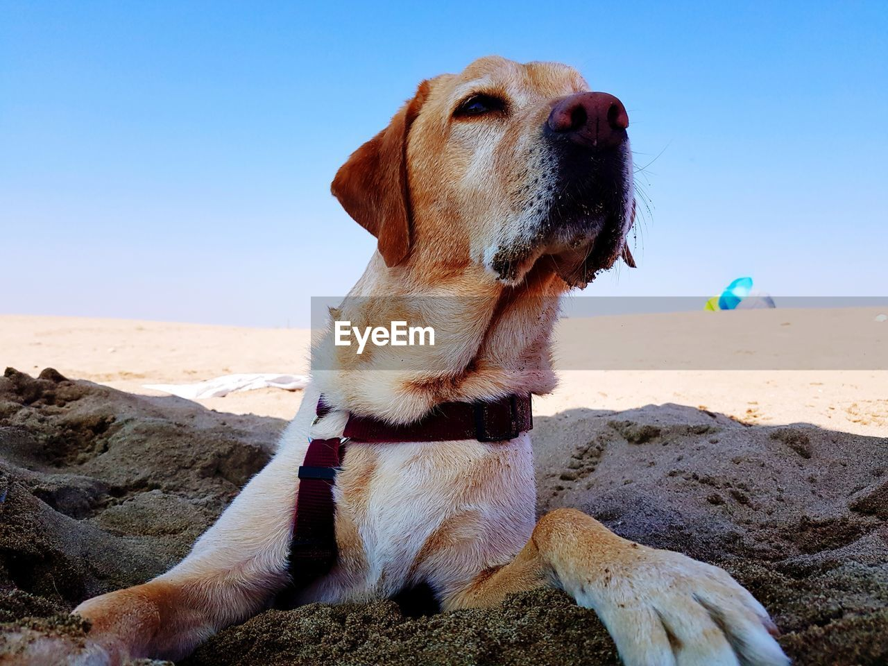 Dog looking away while sitting in sand at beach