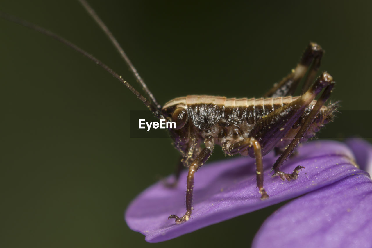 one animal, invertebrate, animal wildlife, insect, animals in the wild, close-up, animal themes, animal, flower, flowering plant, plant, vulnerability, no people, selective focus, beauty in nature, fragility, nature, animal antenna, arthropod, outdoors, purple