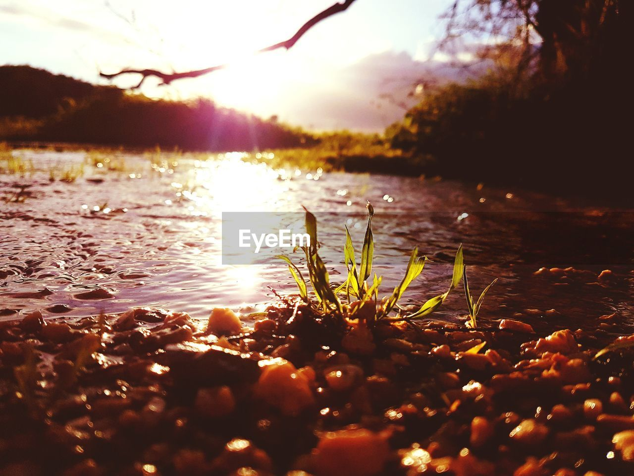 nature, water, sunset, beauty in nature, lake, tranquility, growth, sunlight, tranquil scene, no people, reflection, outdoors, leaf, scenics, plant, tree, silhouette, floating on water, day, sky, close-up