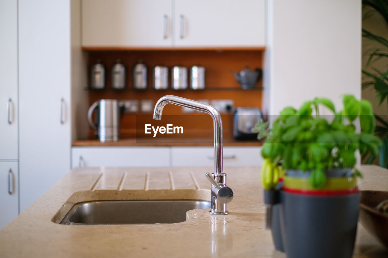 Potted plant by sink on kitchen counter