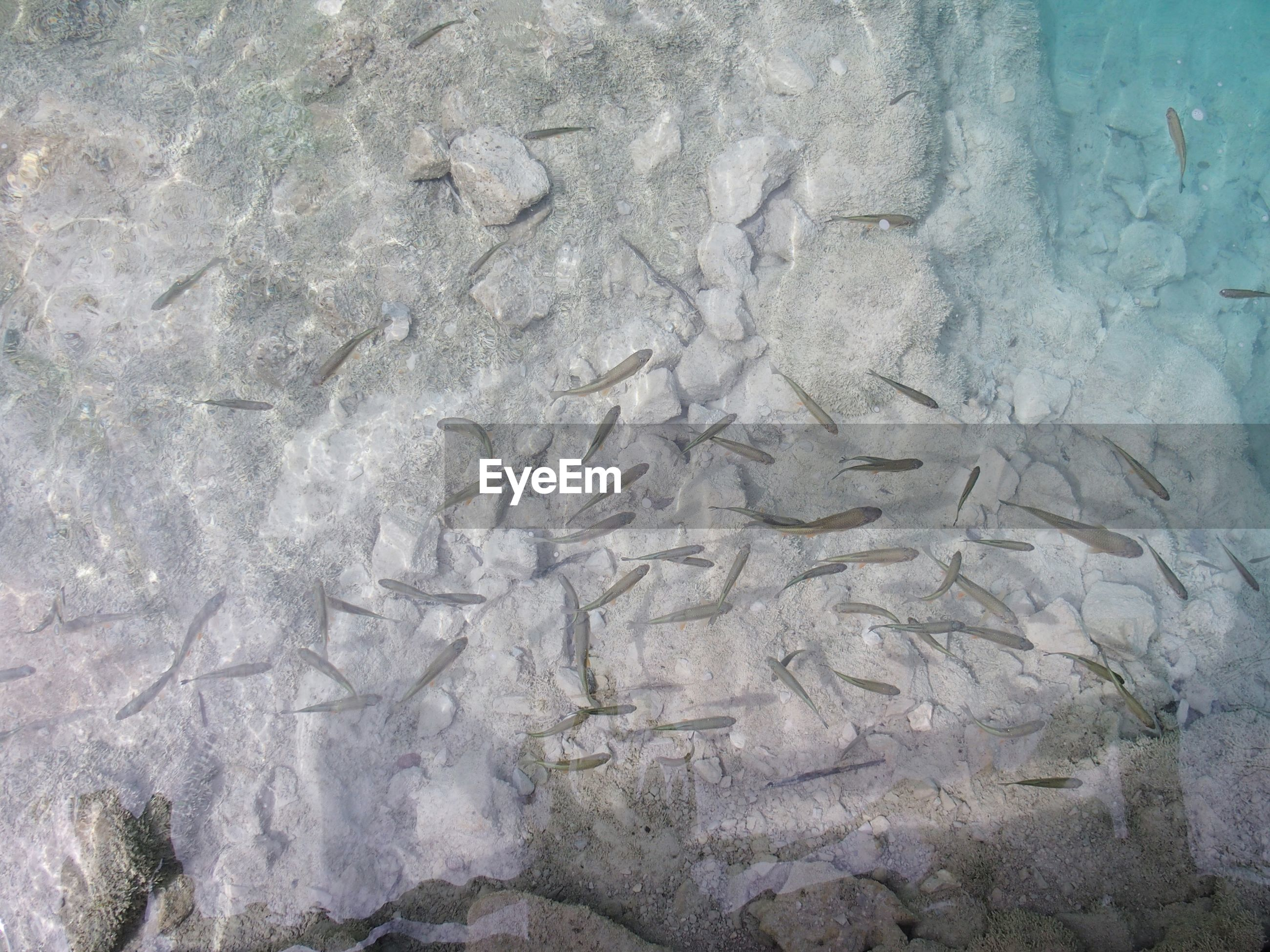HIGH ANGLE VIEW OF WATER ON ROCK