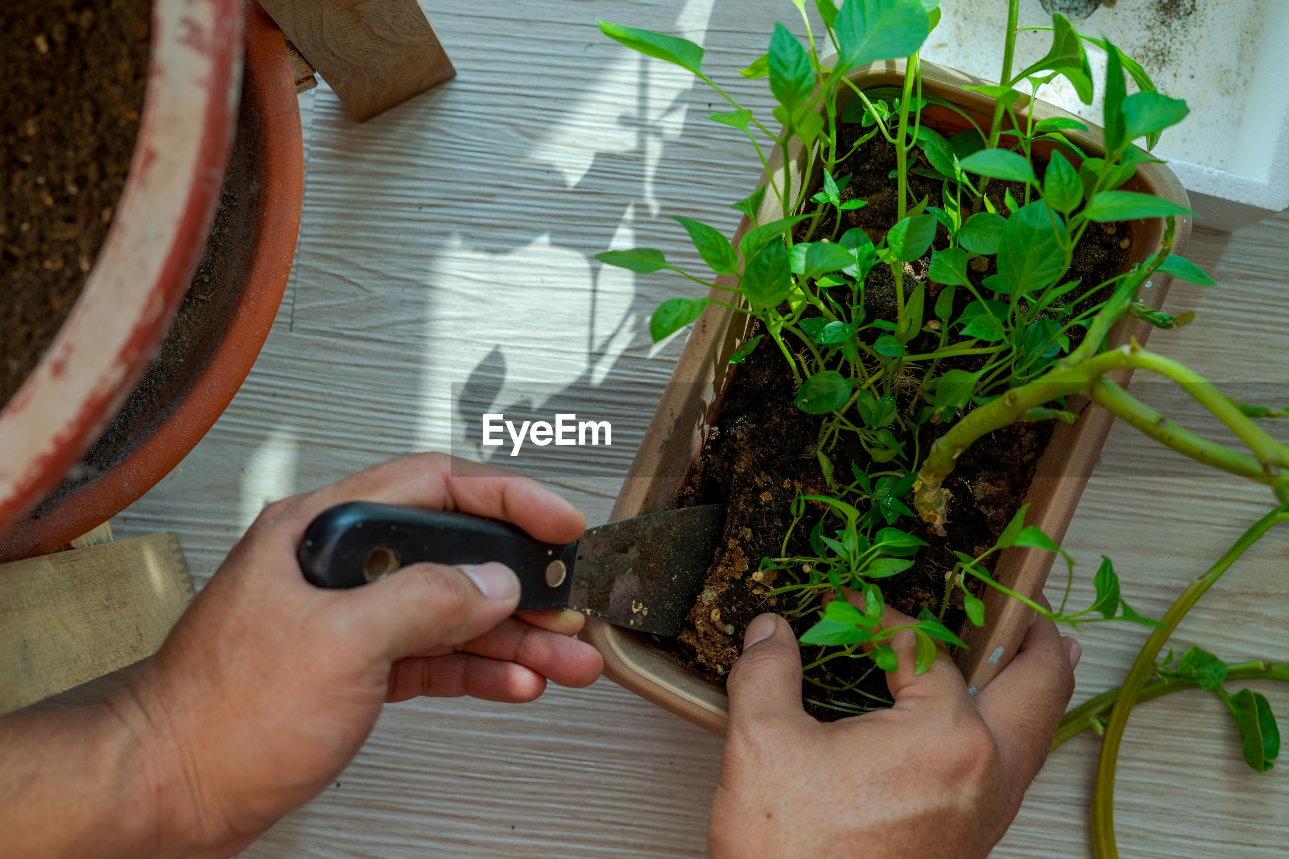 HIGH ANGLE VIEW OF PERSON HAND HOLDING FLOWER POT