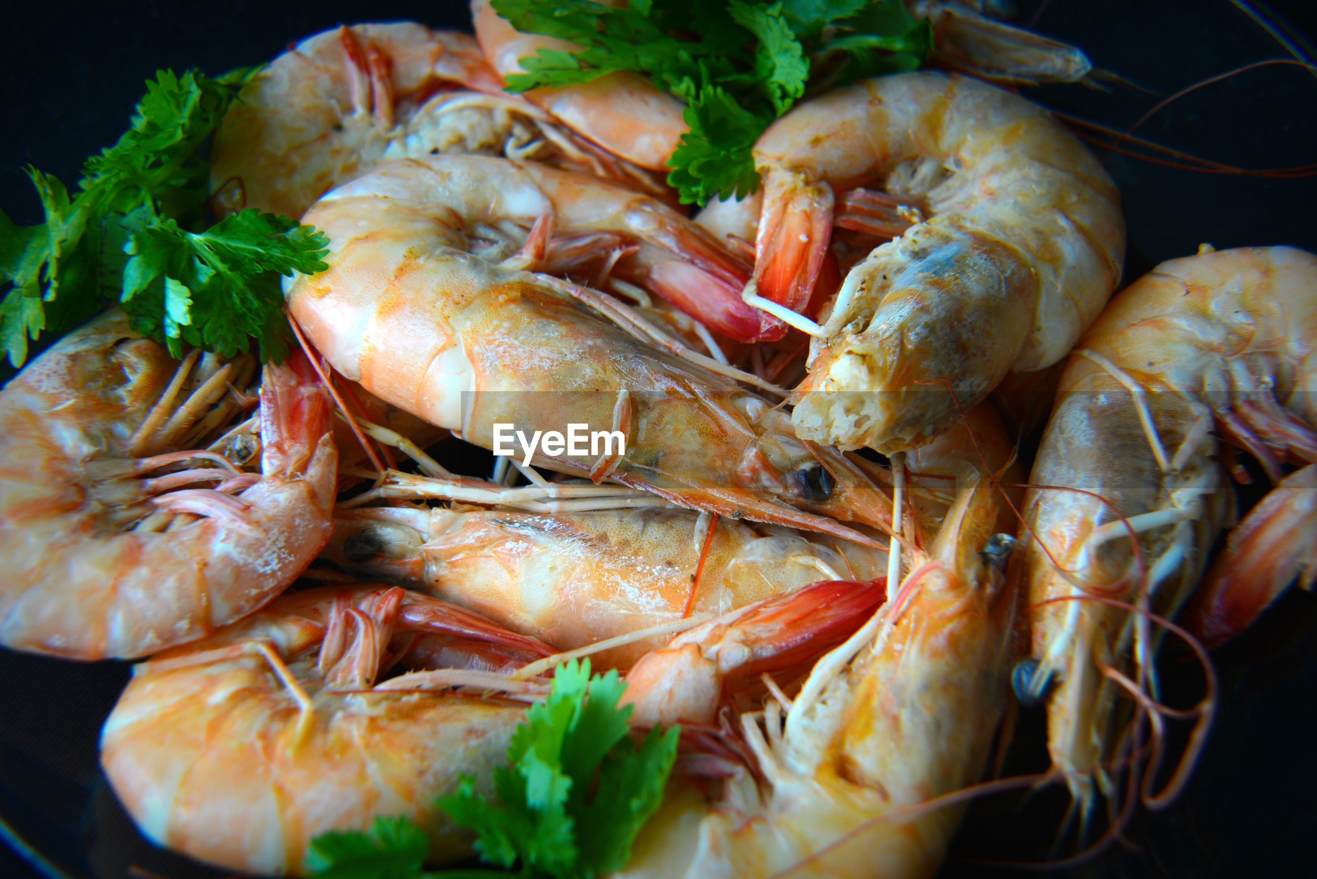 High angle view of shrimps served in plate
