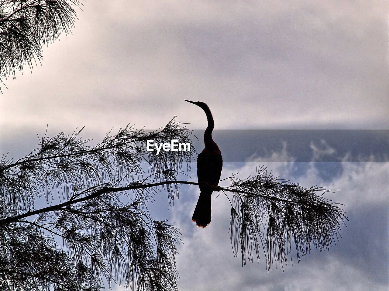 one animal, animal themes, animals in the wild, sky, bird, tree, cloud - sky, low angle view, nature, animal wildlife, no people, day, branch, beauty in nature, outdoors, perching, close-up