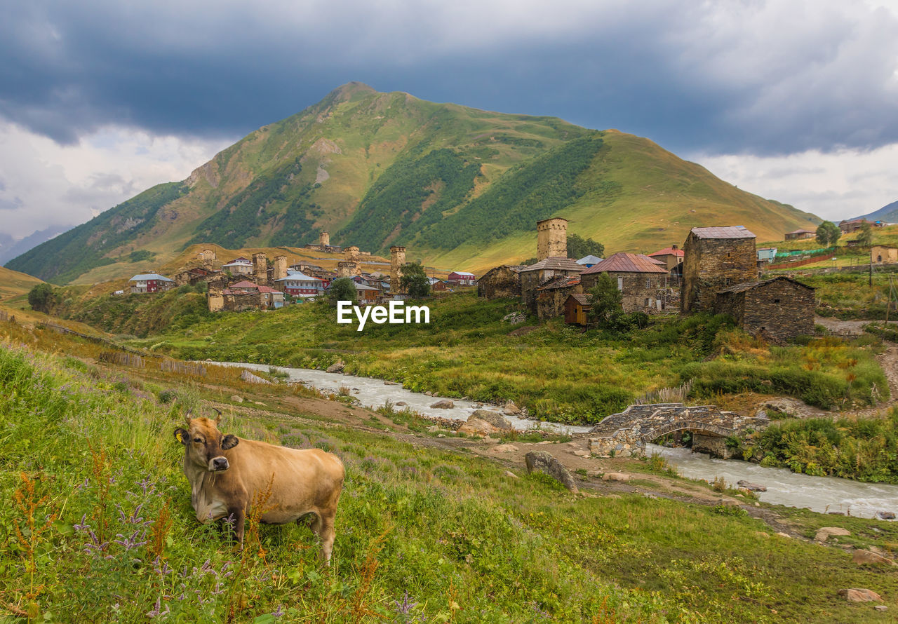 mountain, mammal, animal themes, cloud - sky, sky, animal, scenics - nature, built structure, domestic, domestic animals, beauty in nature, landscape, grass, nature, environment, mountain range, livestock, pets, land, plant, no people, outdoors, herbivorous