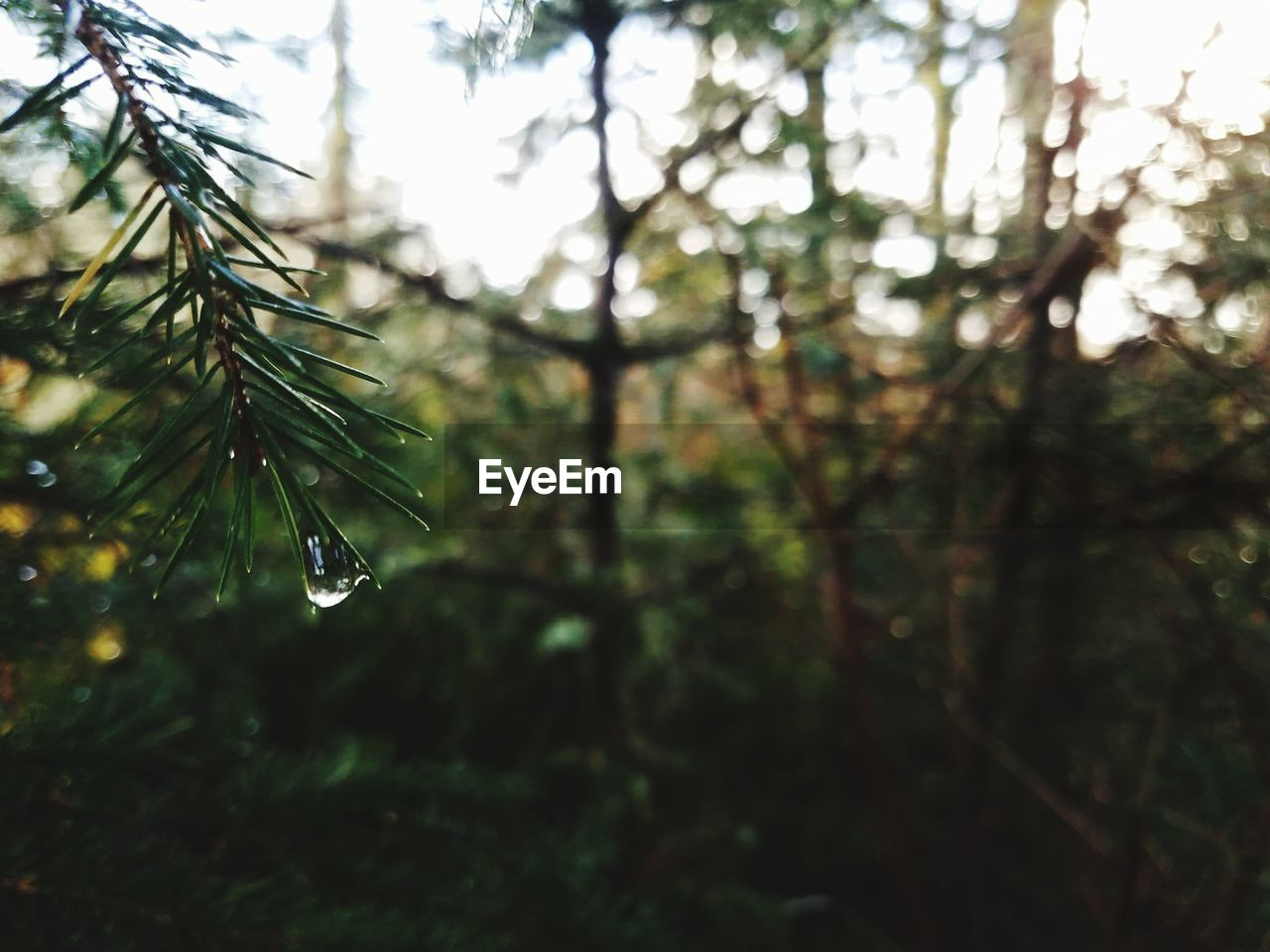 nature, drop, beauty in nature, focus on foreground, water, no people, growth, freshness, day, outdoors, tree, branch, close-up