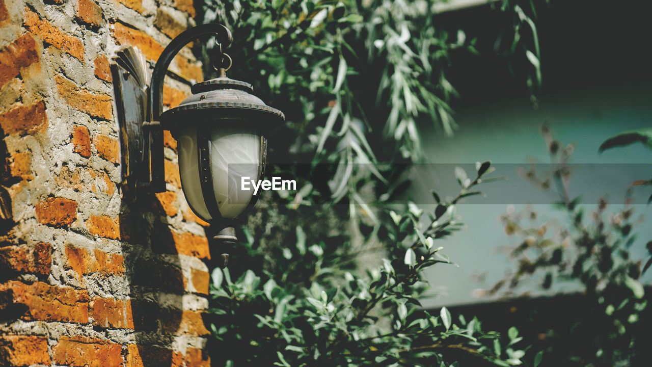 plant, lighting equipment, wall, wall - building feature, no people, day, focus on foreground, electric lamp, technology, growth, nature, brick, close-up, brick wall, leaf, plant part, outdoors, lantern, retro styled, electricity, light