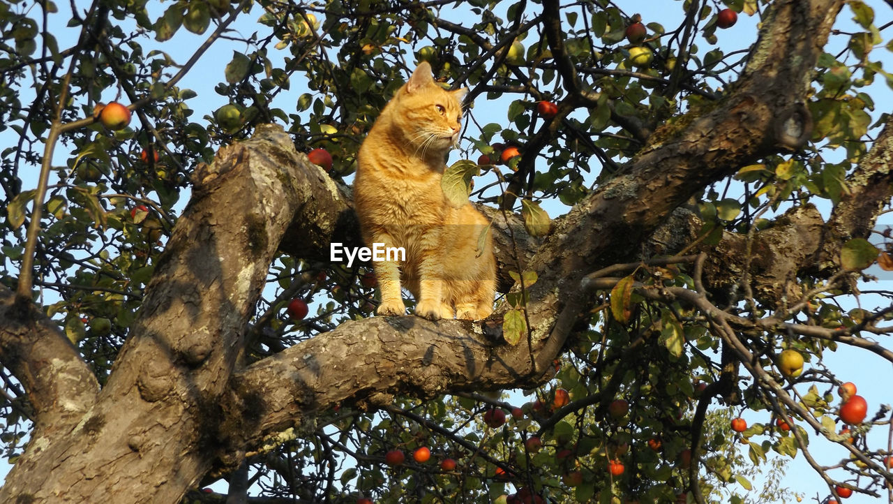 tree, low angle view, animal themes, mammal, animal, plant, branch, vertebrate, animals in the wild, animal wildlife, no people, primate, day, tree trunk, feline, trunk, nature, one animal, sitting, cat, animal family