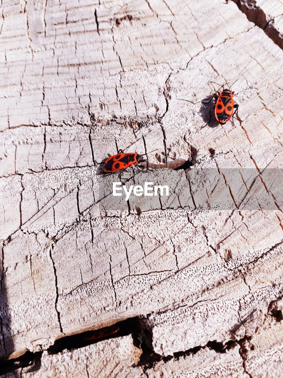 insect, invertebrate, animal themes, animal, animals in the wild, animal wildlife, one animal, no people, day, high angle view, ladybug, beetle, red, outdoors, animal wing, close-up, nature, sunlight, butterfly - insect