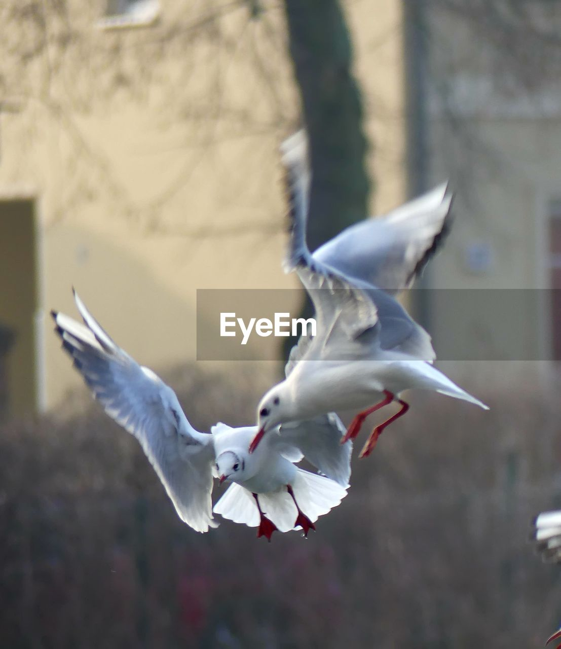 flying, bird, animal themes, vertebrate, spread wings, animal, white color, no people, animals in the wild, mid-air, beauty in nature, day, focus on foreground, animal wildlife, nature, flower, motion, close-up, flowering plant, outdoors, seagull