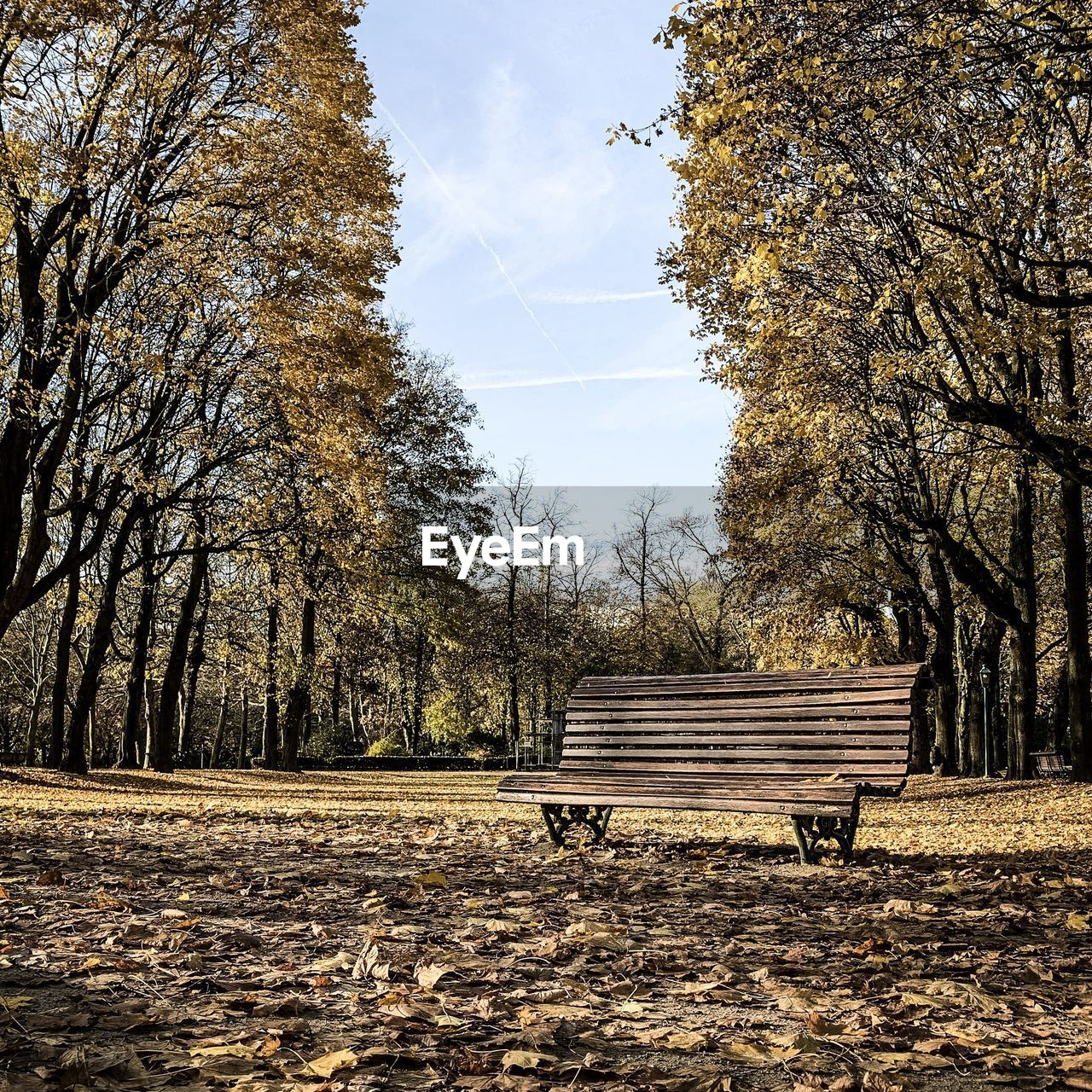 Empty bench in park during autumn