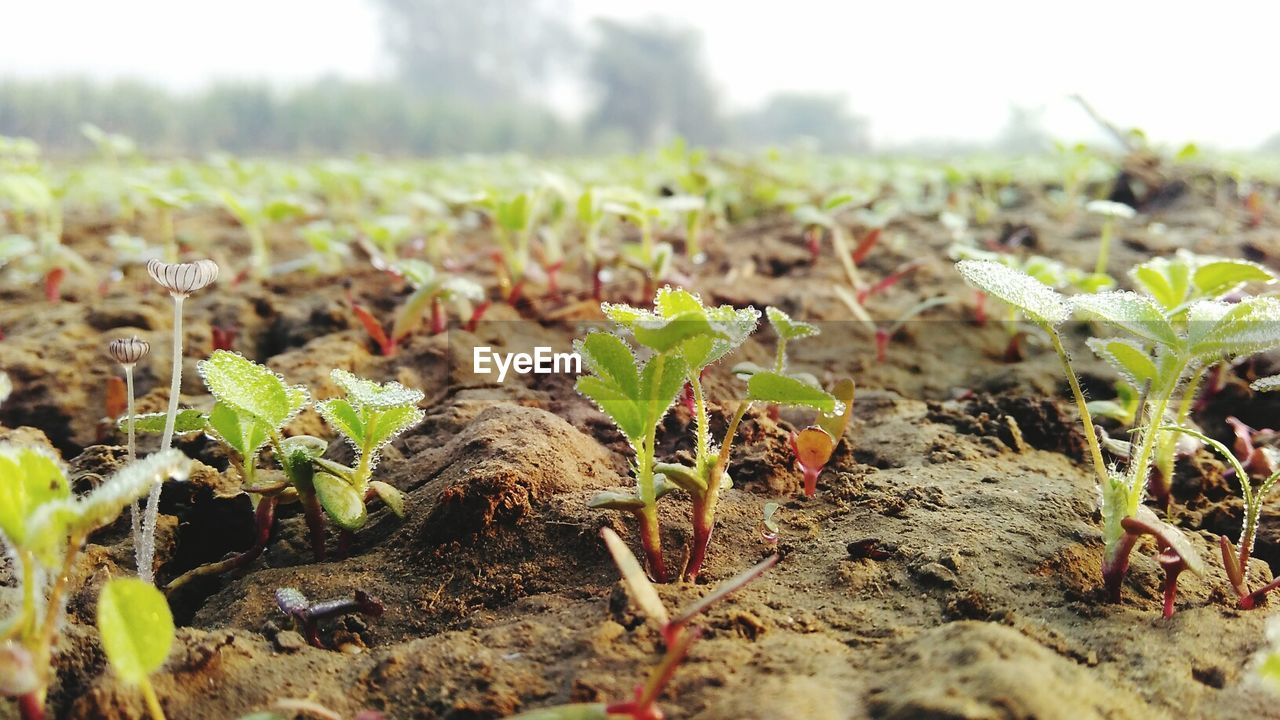 Close-Up Of Wet Plants Growing On Field