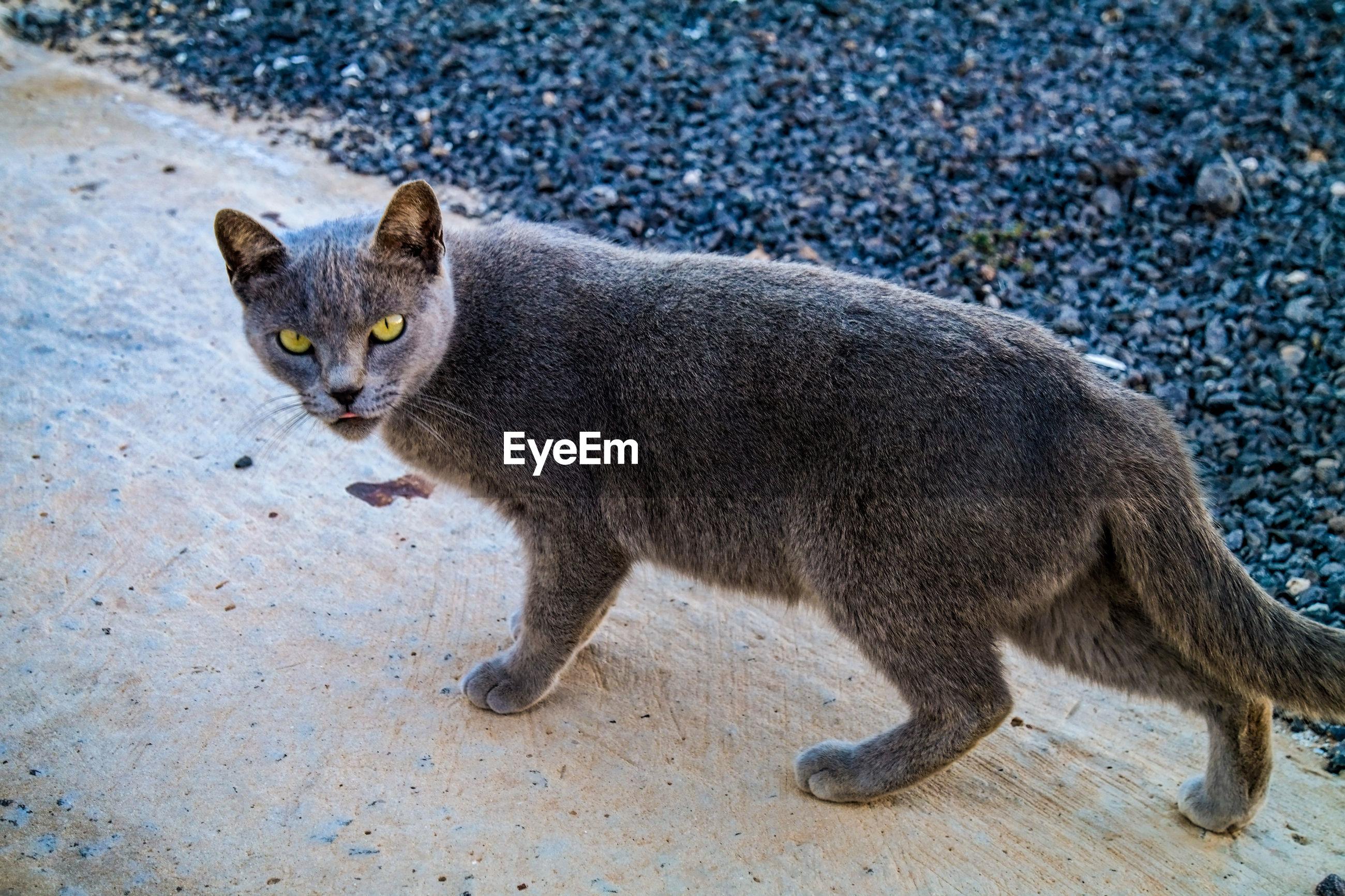 PORTRAIT OF A CAT ON STREET