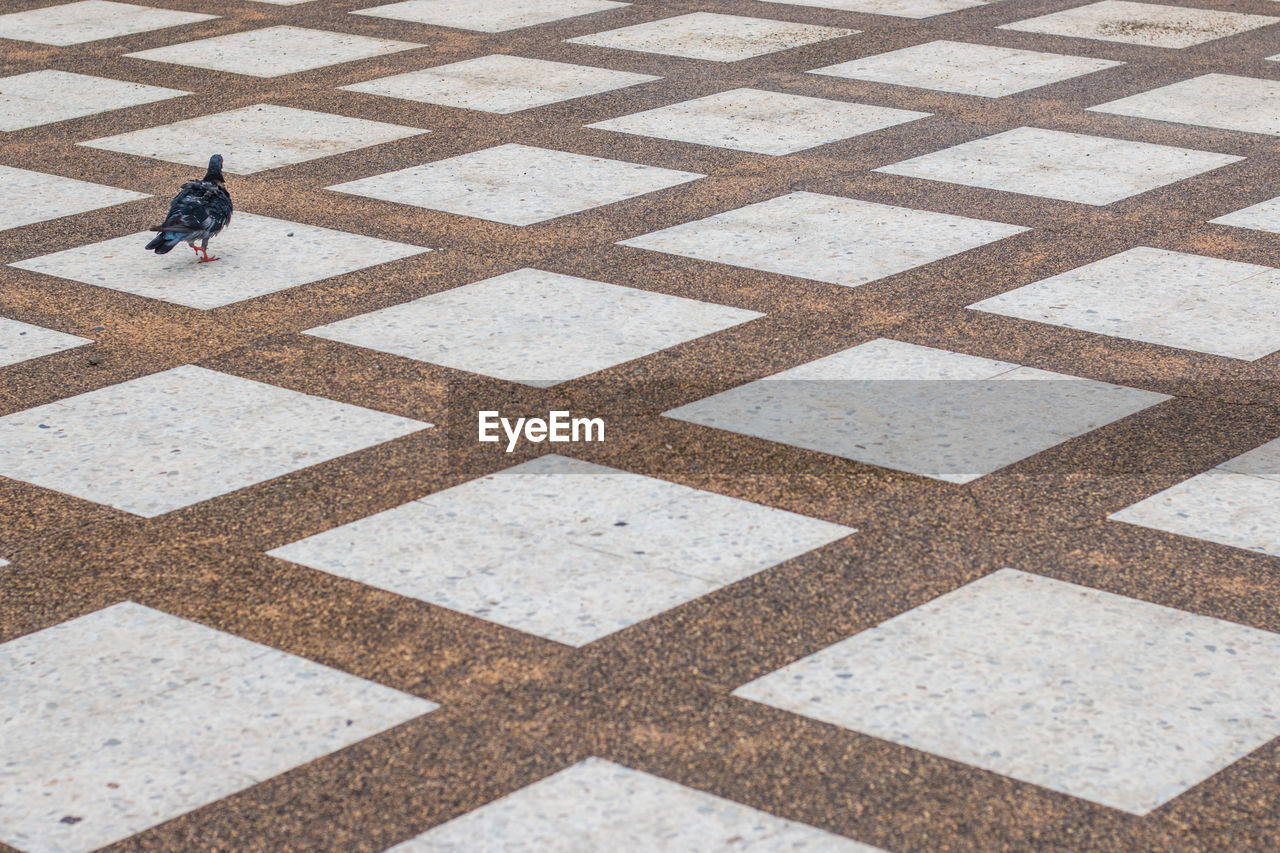 High Angle View Of Pigeon On Patterned Footpath