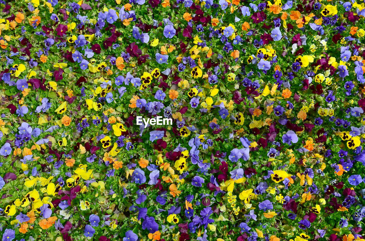 flowering plant, flower, plant, freshness, beauty in nature, vulnerability, fragility, full frame, backgrounds, multi colored, yellow, choice, growth, variation, abundance, high angle view, no people, day, flower head, inflorescence, outdoors, flowerbed