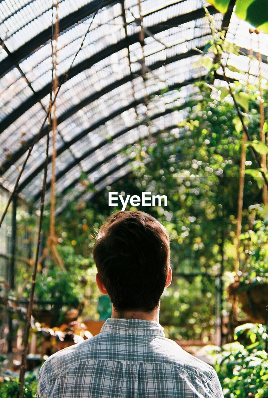 Rear View Of A Man Standing In Greenhouse