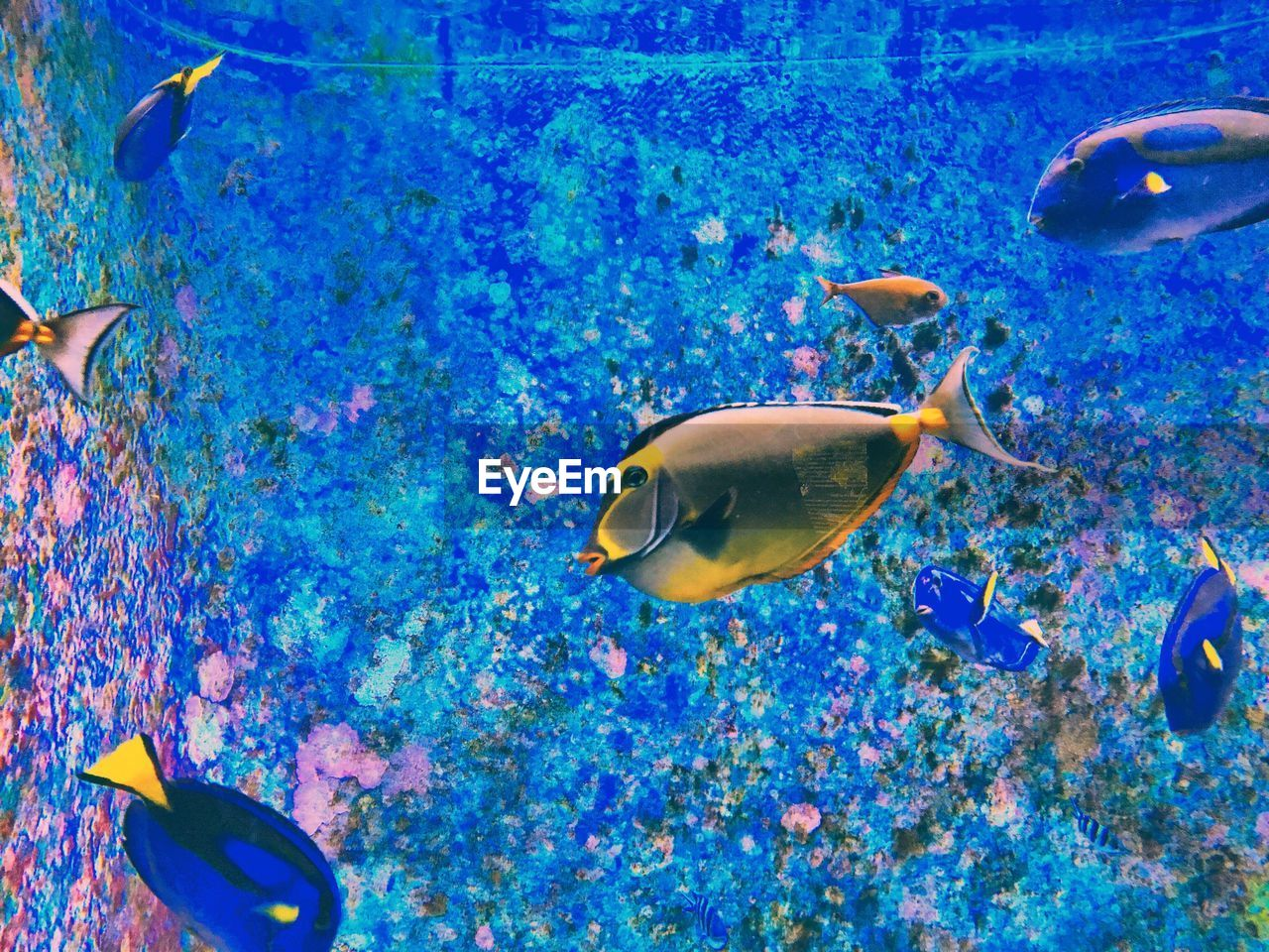 water, fish, swimming, animal themes, sea life, underwater, animals in the wild, large group of animals, nature, no people, multi colored, blue, aquarium, beauty in nature, undersea, indoors, close-up, day