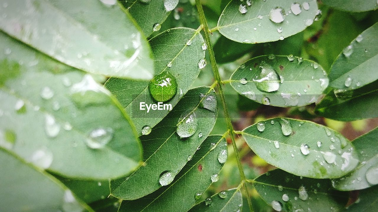 leaf, drop, green color, wet, water, nature, raindrop, growth, close-up, no people, beauty in nature, freshness, day, plant, outdoors, fragility, animal themes