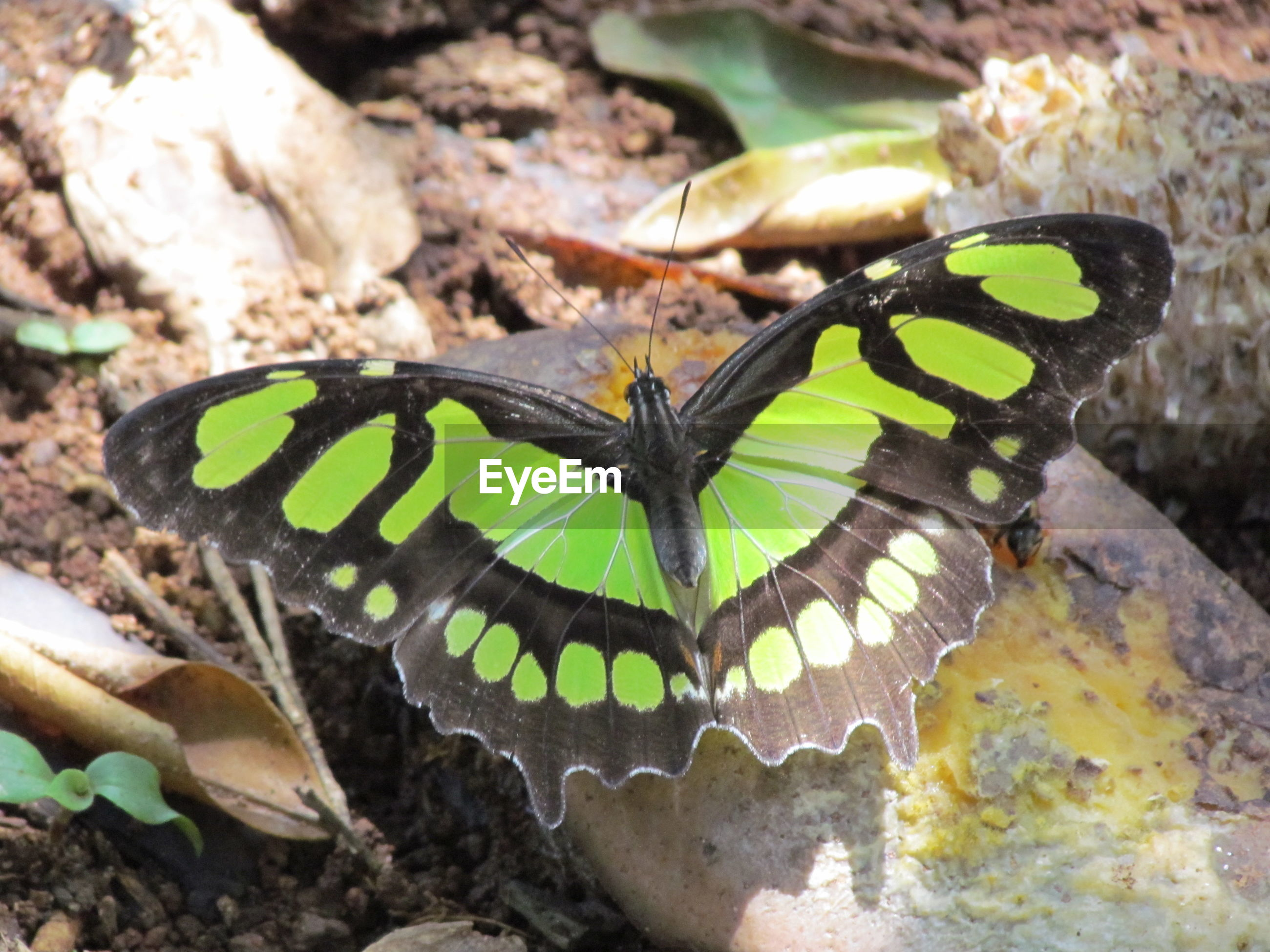 Close-up of insect, butterfly