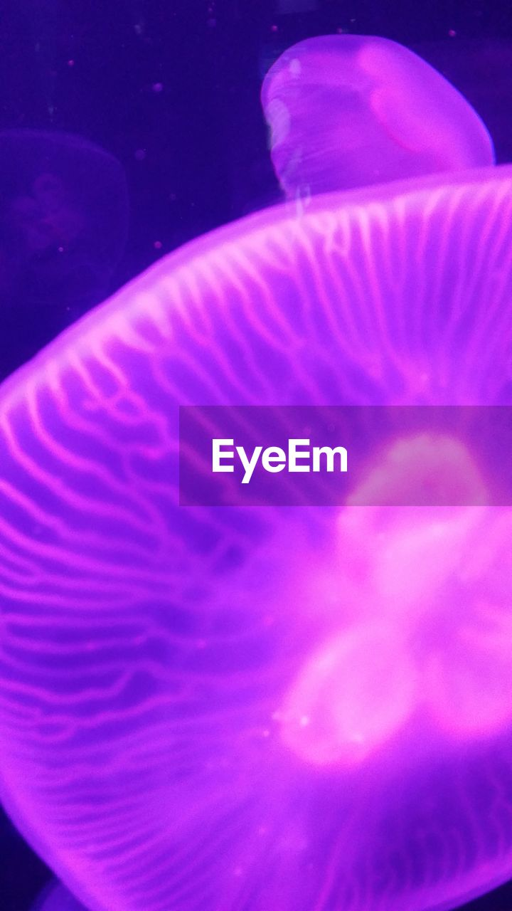 sea life, underwater, water, jellyfish, swimming, pink color, undersea, animal themes, close-up, no people, aquarium, one animal, nature, sea, animals in the wild, beauty in nature, indoors, fragility, sea anemone, day