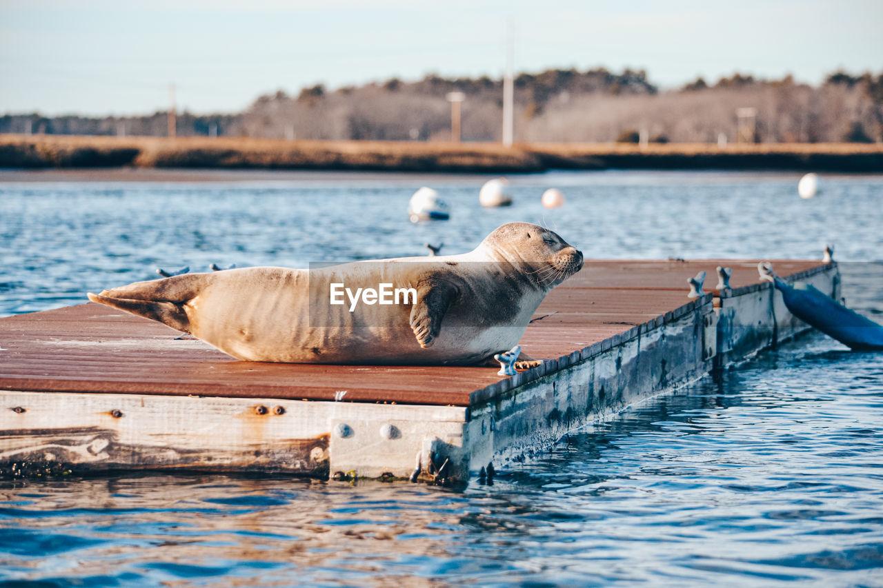 Waterfront seal
