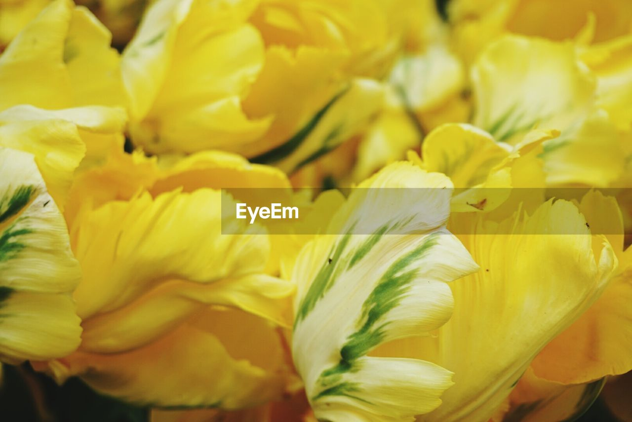 flower, petal, freshness, yellow, fragility, flower head, beauty in nature, nature, close-up, growth, no people, blooming, full frame, day, outdoors