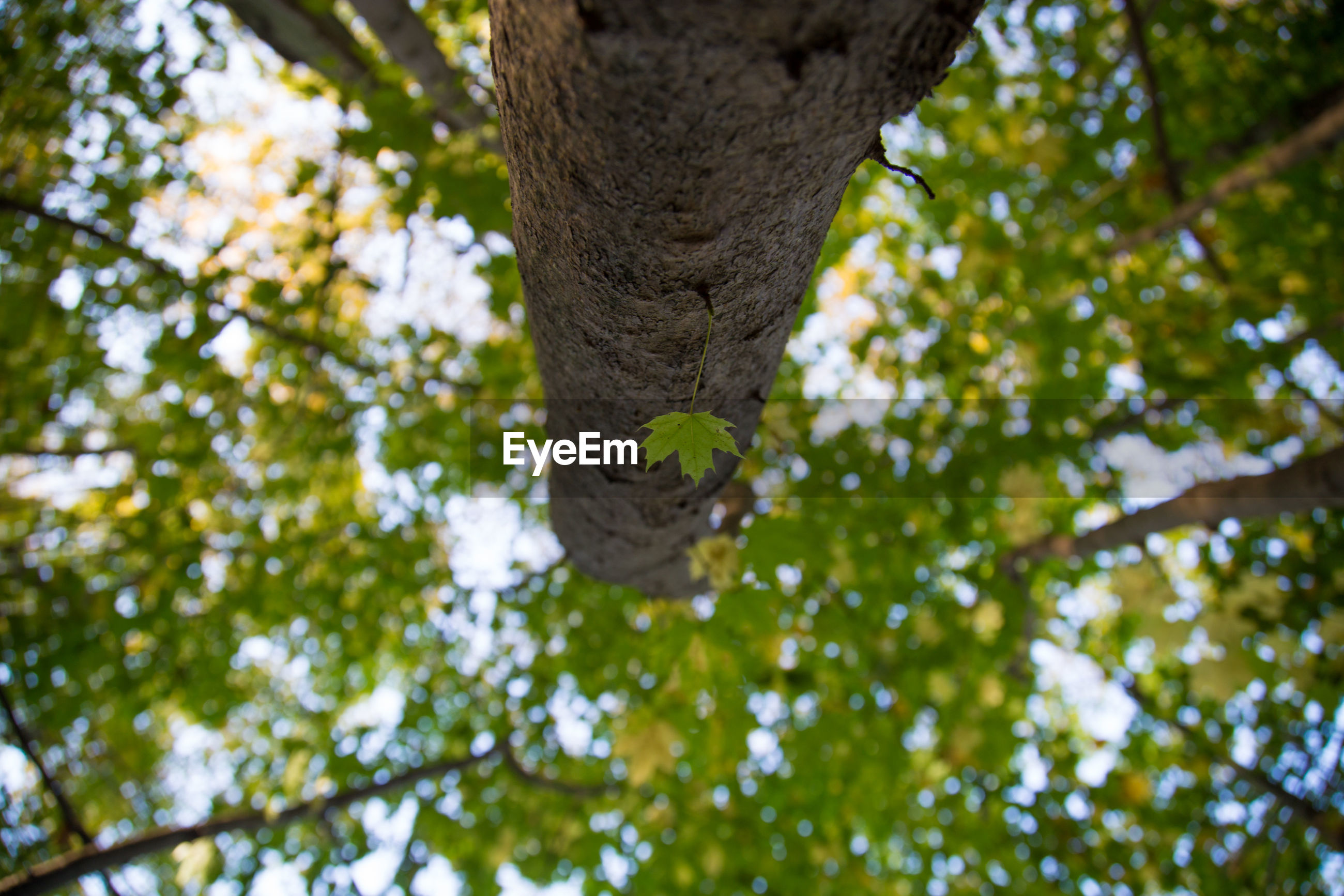 tree, low angle view, growth, nature, branch, day, green color, outdoors, tree trunk, focus on foreground, leaf, no people, forest, beauty in nature, close-up, animal themes