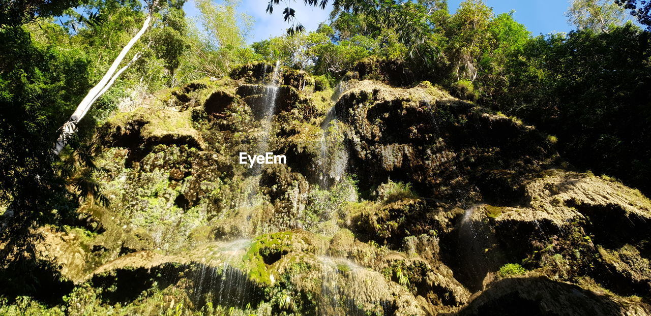 plant, tree, nature, no people, day, water, motion, beauty in nature, growth, outdoors, sunlight, forest, land, green color, foliage, lush foliage, sky, low angle view, scenics - nature, flowing water