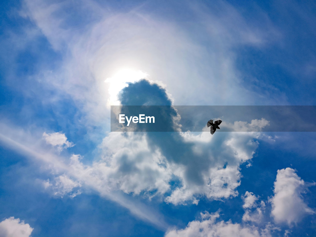 cloud - sky, sky, low angle view, animal themes, animal, one animal, bird, animals in the wild, vertebrate, animal wildlife, flying, nature, sunlight, beauty in nature, day, no people, spread wings, mid-air, sunbeam, blue, sun, outdoors, lens flare, bright, directly below