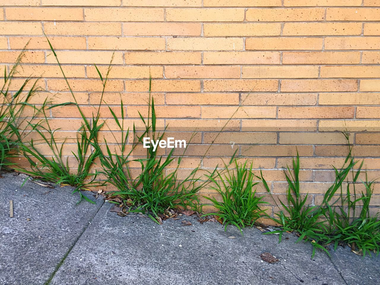 Grass Growing On Footpath Against Brick Wall