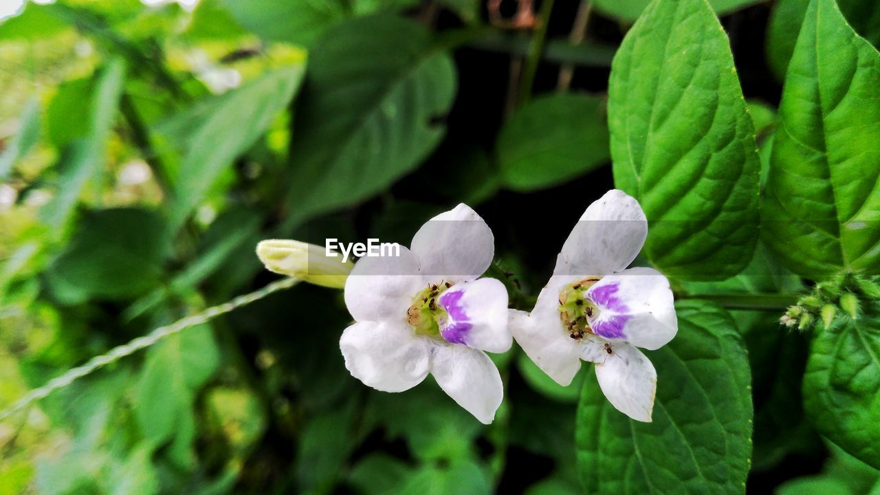 growth, flower, green color, nature, plant, leaf, beauty in nature, fragility, freshness, no people, day, outdoors, close-up, blooming, flower head, tree