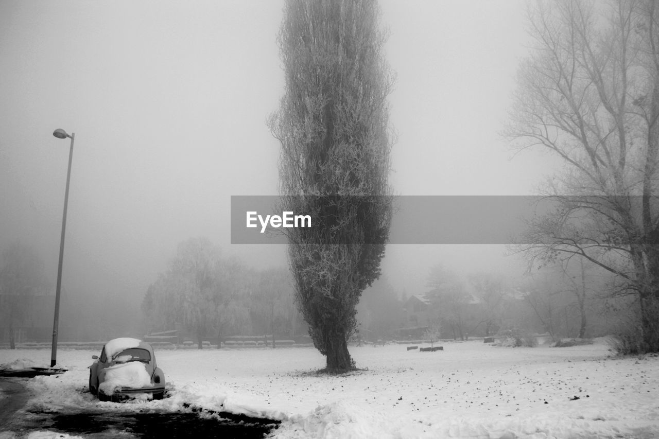 snow, cold temperature, winter, tree, plant, nature, field, land, no people, fog, covering, tranquility, beauty in nature, scenics - nature, day, mode of transportation, tranquil scene, white color, transportation, snowing, outdoors, extreme weather, blizzard, snowcapped mountain