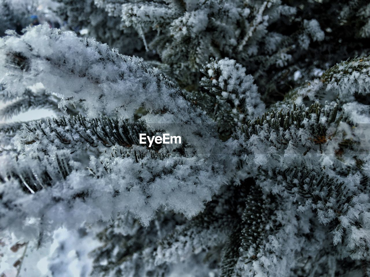 winter, snow, cold temperature, weather, frozen, nature, no people, ice, close-up, white color, backgrounds, full frame, frost, day, outdoors, snowflake, beauty in nature, ice crystal, tree, freshness