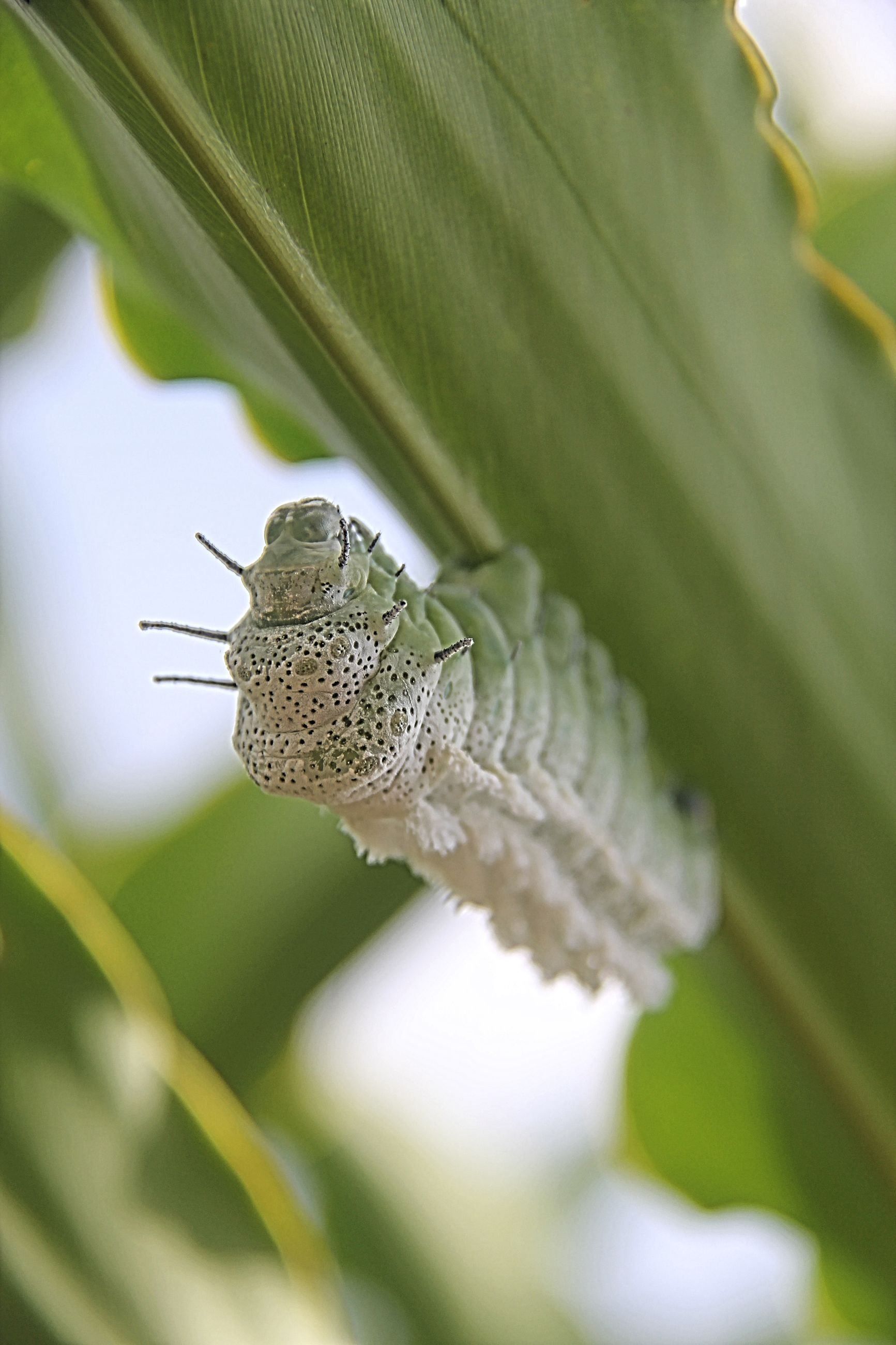 Close-up of caterpillar on leaf