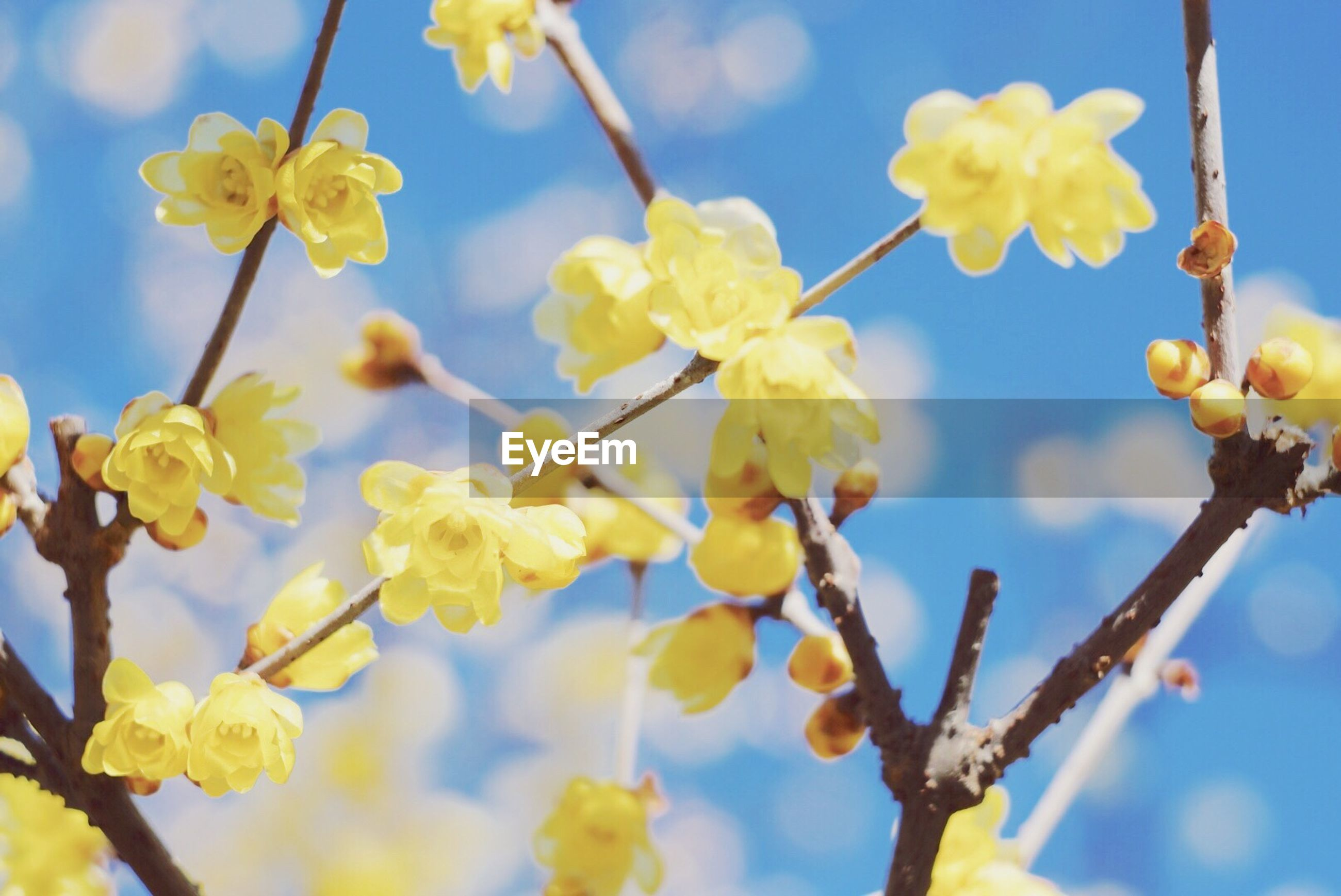 nature, growth, beauty in nature, low angle view, fragility, yellow, no people, close-up, tree, day, outdoors, sky, freshness, branch