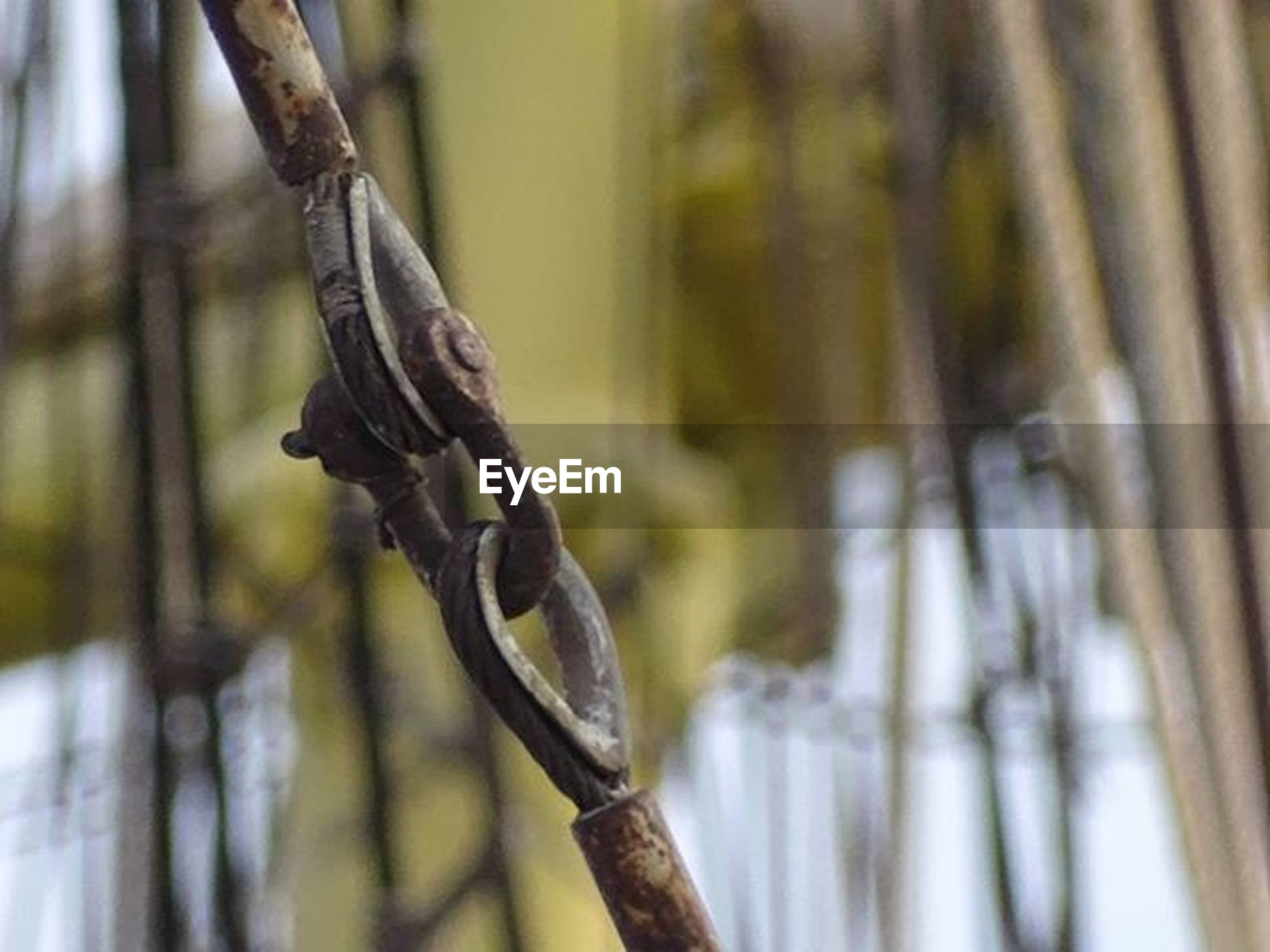 focus on foreground, close-up, selective focus, tree trunk, hanging, wood - material, tree, day, nature, no people, outdoors, branch, wood, twig, forest, rope, pole, metal, growth, textured