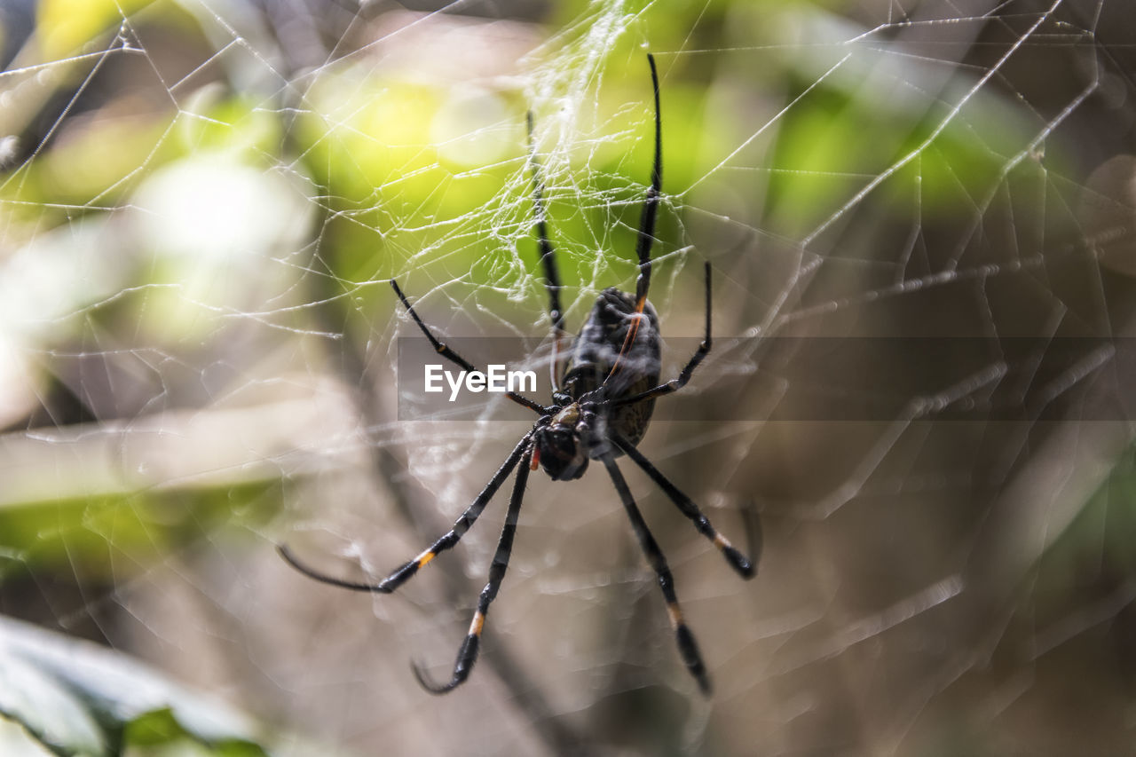 invertebrate, insect, animals in the wild, animal themes, animal wildlife, animal, one animal, arachnid, spider web, spider, close-up, fragility, arthropod, focus on foreground, survival, vulnerability, animal leg, day, zoology, animal body part, web, no people, outdoors