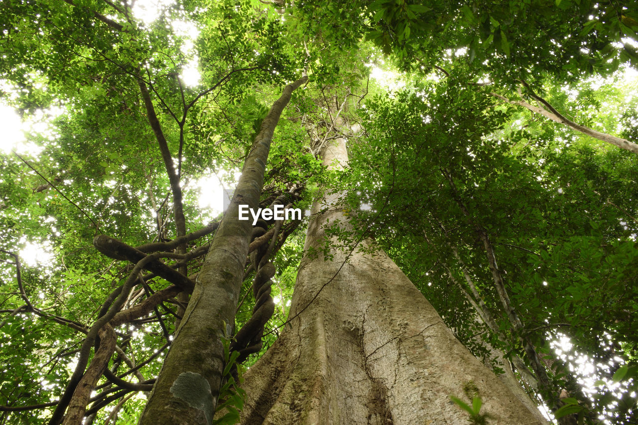 tree, low angle view, branch, growth, nature, tree trunk, forest, day, no people, outdoors, green color, beauty in nature, sky
