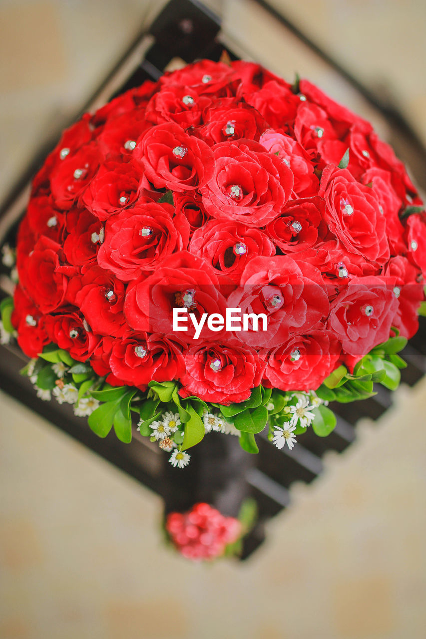 red, flower, freshness, beauty in nature, petal, no people, nature, close-up, fragility, flower head, growth, blooming, indoors, day