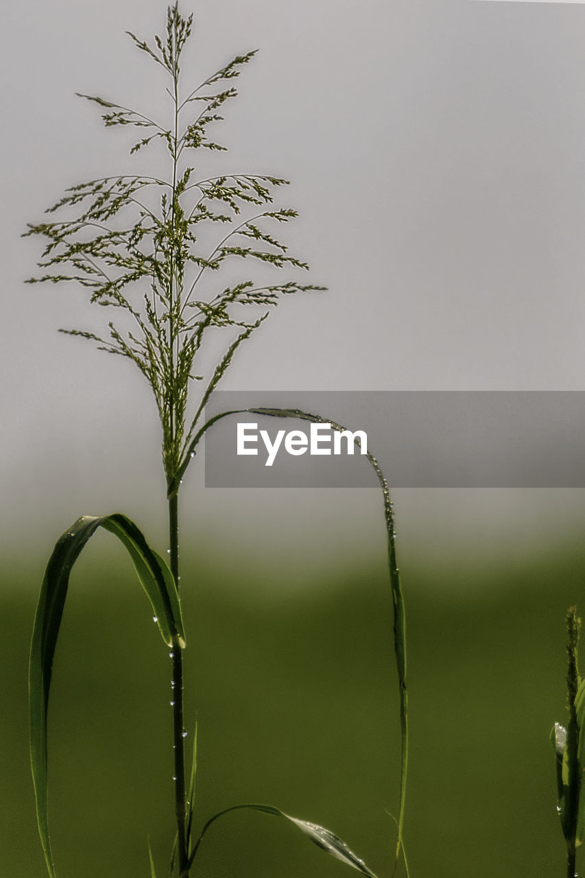 plant, growth, beauty in nature, close-up, green color, nature, focus on foreground, no people, plant part, leaf, day, tranquility, outdoors, fragility, selective focus, plant stem, vulnerability, sky, freshness, grass