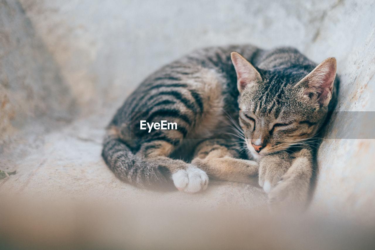 Close-Up Of Kitten Relaxing