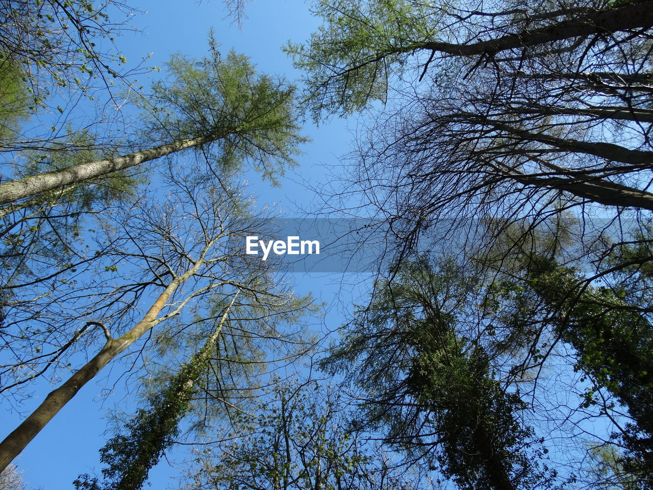 tree, low angle view, nature, branch, growth, beauty in nature, no people, outdoors, day, forest, sky, clear sky, scenics