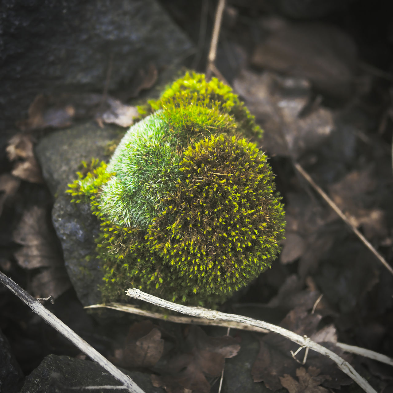 High Angle View Of Plant Growing On Field