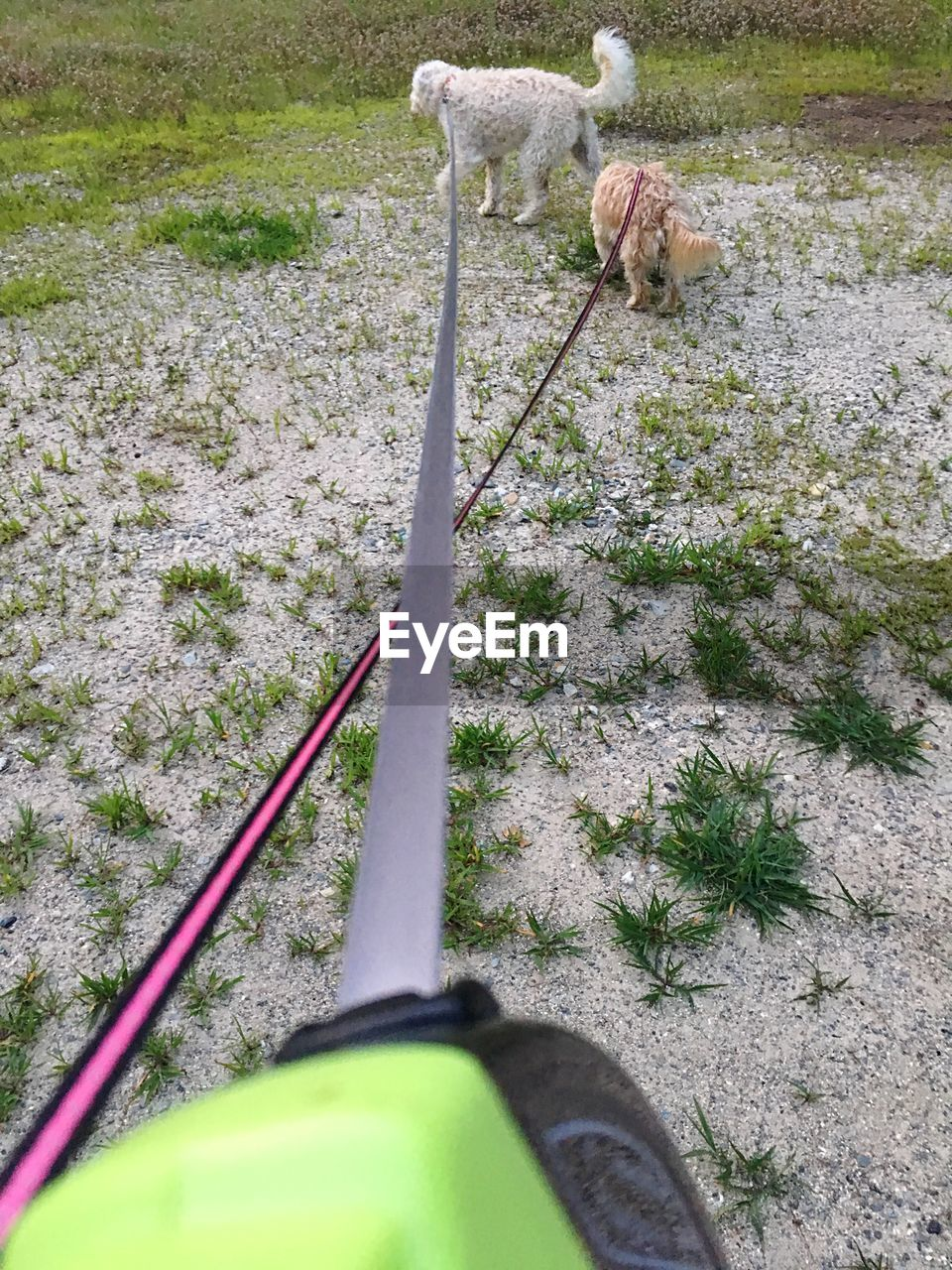 dog, day, pets, animal themes, domestic animals, mammal, grass, outdoors, nature, human body part, one person, people