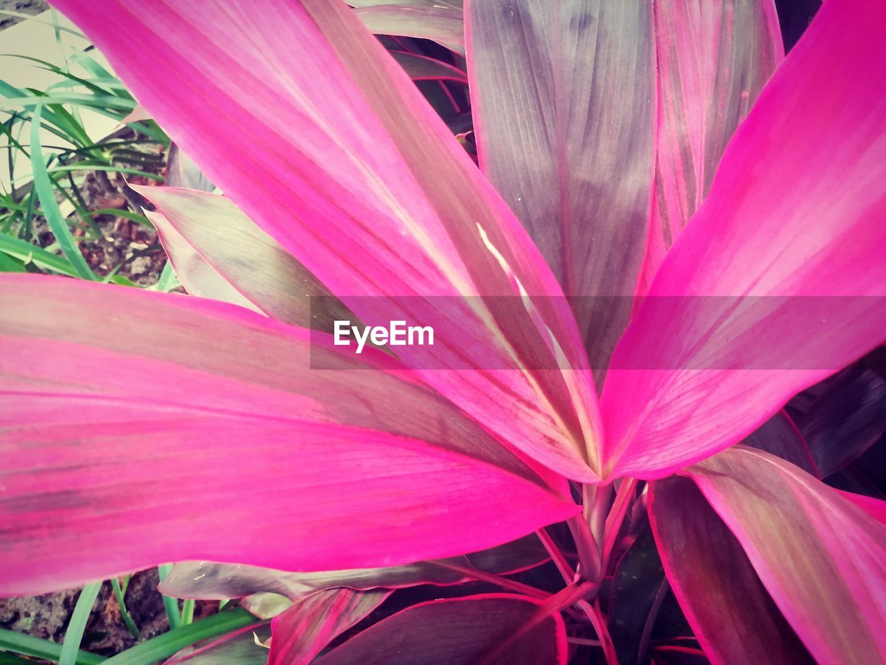 flower, growth, petal, nature, plant, beauty in nature, pink, no people, pink color, fragility, blooming, flower head, outdoors, freshness, close-up, day