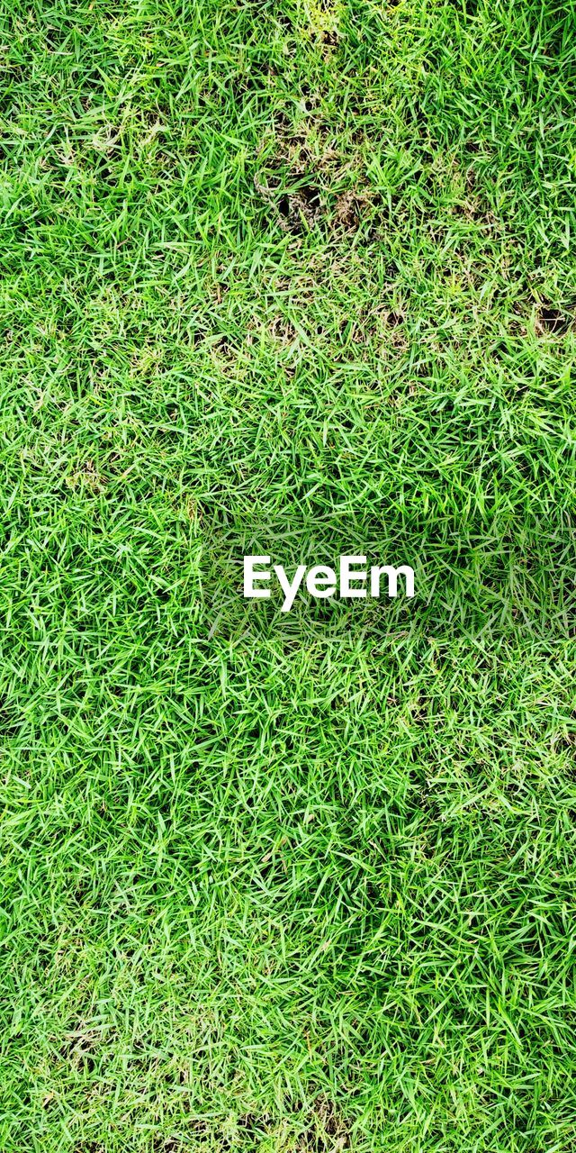 green color, grass, plant, full frame, field, land, high angle view, nature, growth, day, backgrounds, no people, outdoors, directly above, foliage, lush foliage, beauty in nature, lawn, close-up, freshness