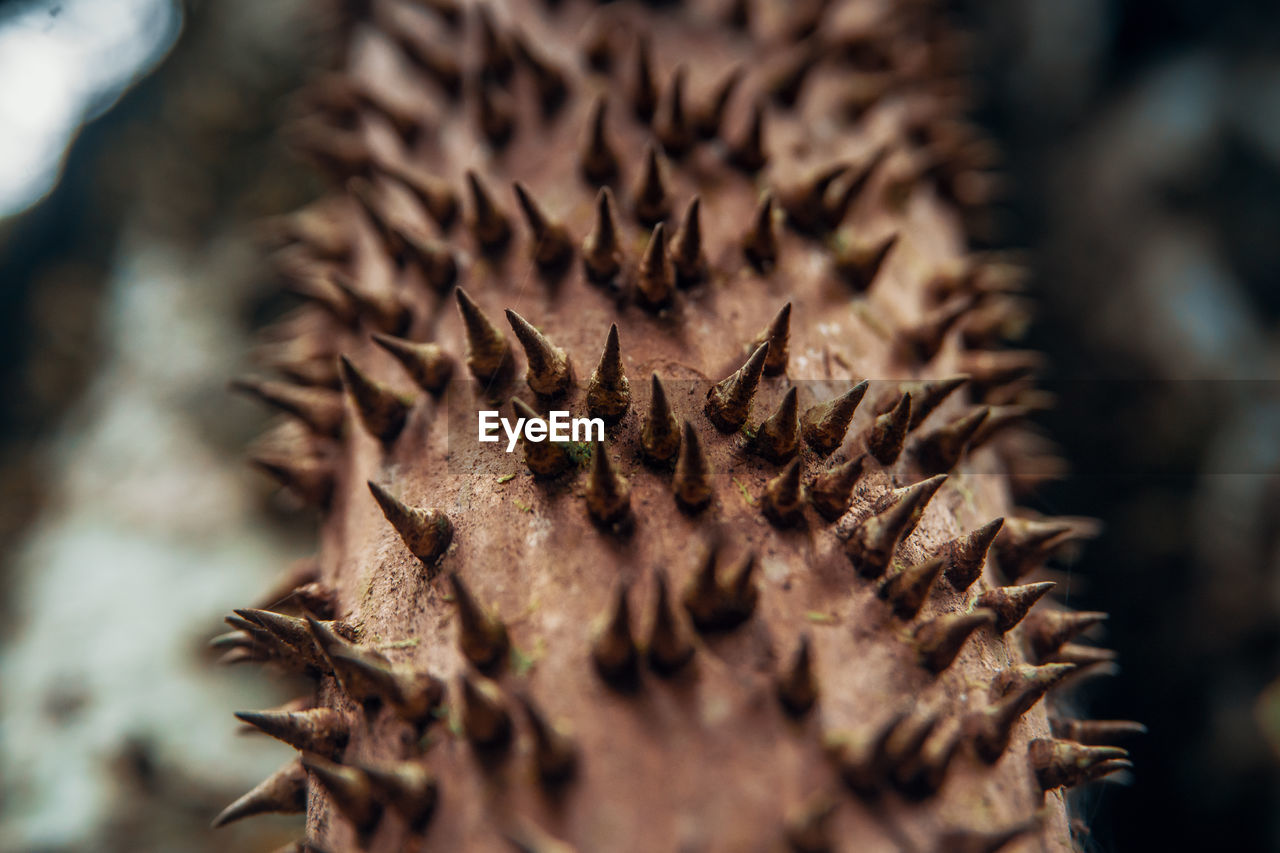 selective focus, close-up, no people, brown, dry, still life, plant, day, nature, natural pattern, pattern, sharp, freshness, food and drink, beauty in nature, spiked, growth, outdoors, food, dried, spiky