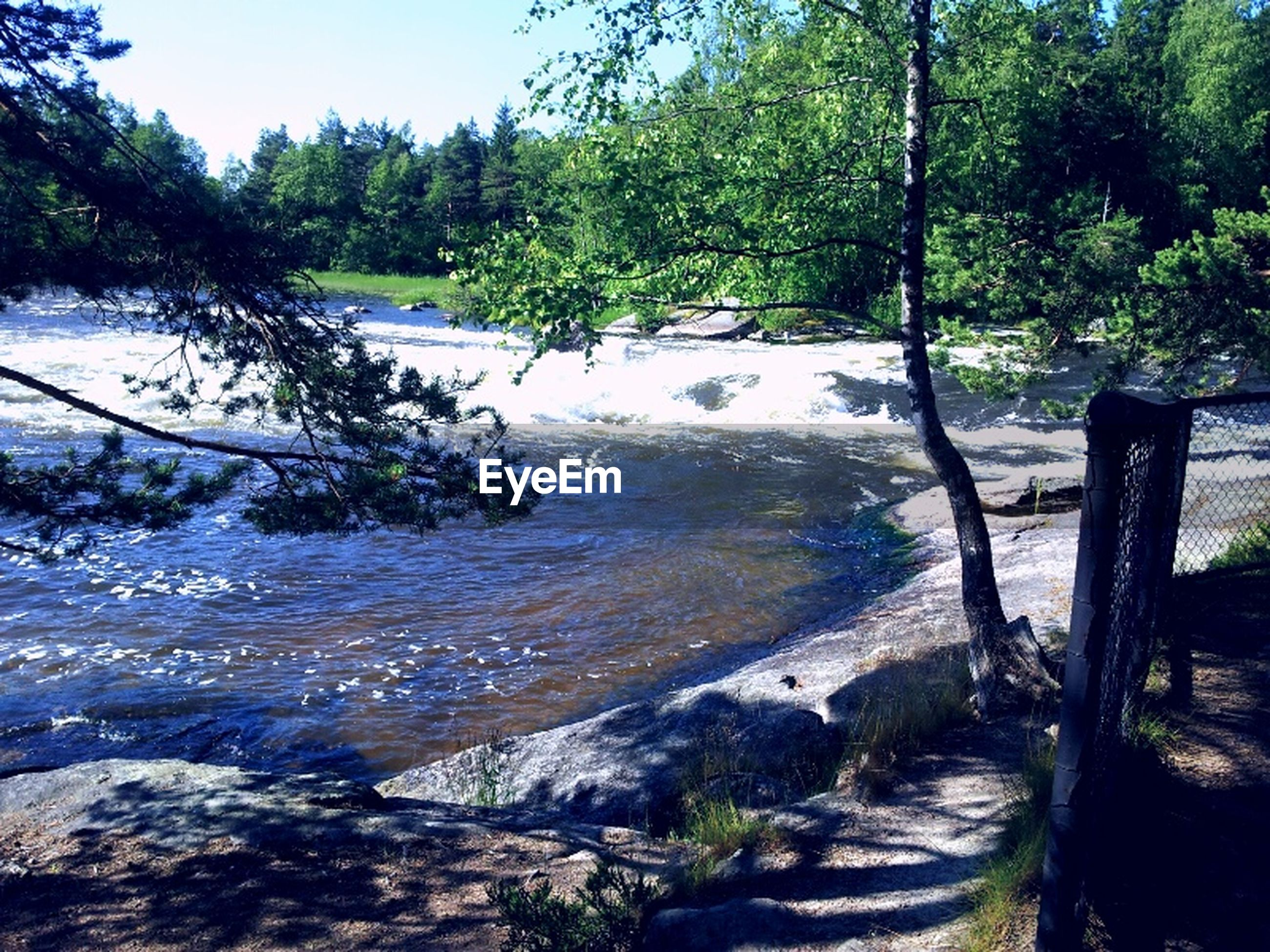 tree, water, rock - object, scenics, tranquility, tranquil scene, beauty in nature, nature, river, forest, stream, rock, flowing water, growth, flowing, rock formation, idyllic, day, non-urban scene, sunlight
