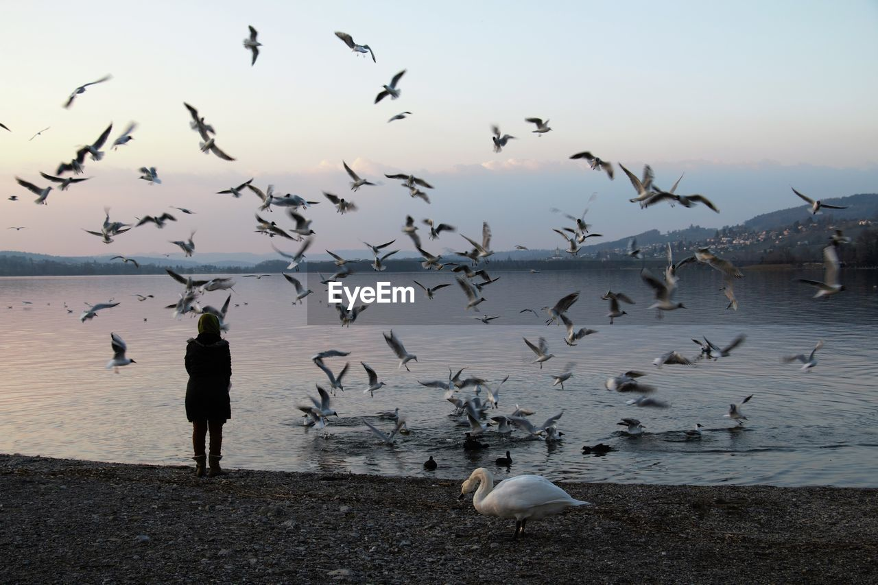 Rear View Of Woman Looking At Seagulls Flying At Beach